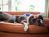 Pets Boost Social Skills In Kids With Autism