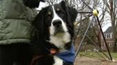 Specially Trained Dogs Changing The Lives Of Autistic Children